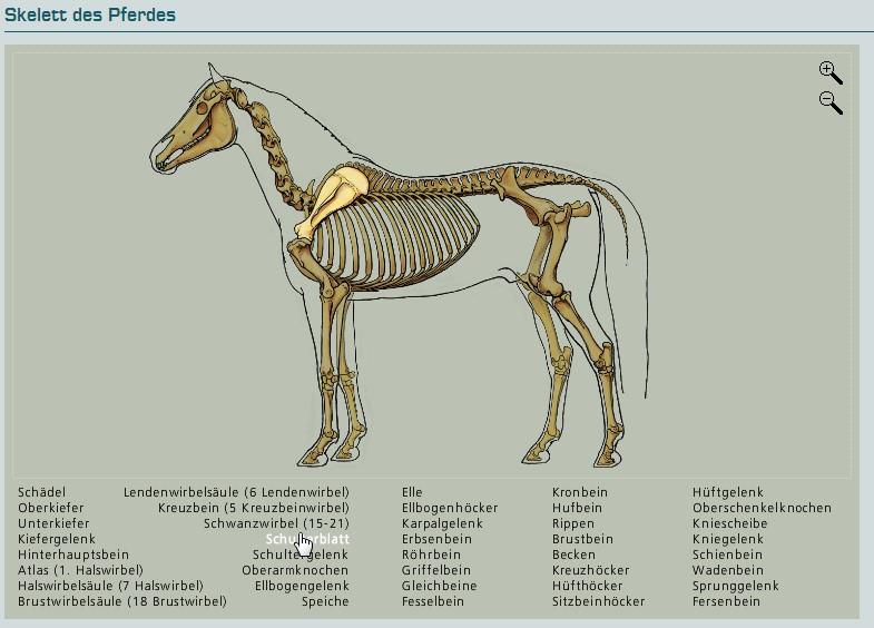 Ein muss f r jeden pferde interessierten neue webbasierte for Exterieur beurteilung pferd
